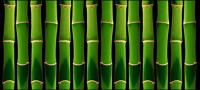 Green bamboo background of the picture material-2