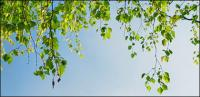 Green plants under the blue sky picture material