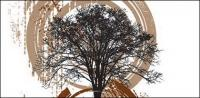 Vector illustration tree theme material