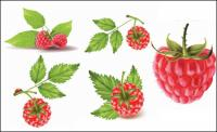 Red berries vector material