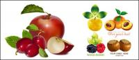 Fruit set vector of material