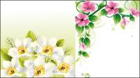 Vector flower borders u0026amp; background