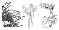 Plum, camellia,  cymbidium, child daffodils, magnolia, apricot