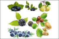 Fruits, blueberries, pears, pistachios, chestnuts vector