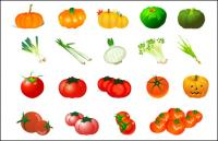 Vegetable Vector - Pumpkin Tomato Garlic Onion