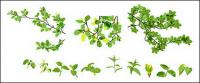 Vector material leaves of spring