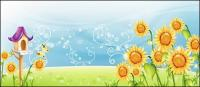 Sunflower scenery