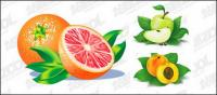Oranges, apples, Peach vector material