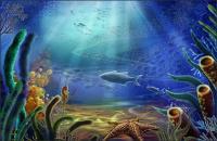 Underwater World - starfish, hippocampus, fish, seaweed psd layered material