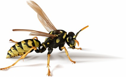 realistic vector insects bees