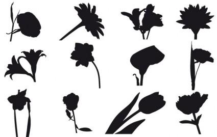 ฟิลด์ฟรีดอกไม้