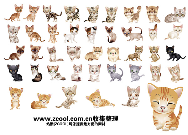 lovely small cat vector material