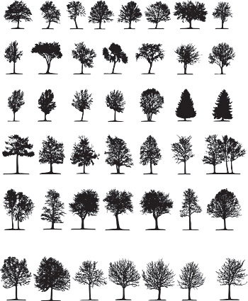 Elements of trees in Pictures