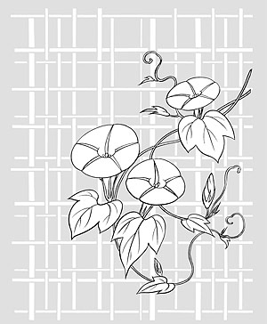 Vector line drawing of flowers-26(Morning glory, lattice background)