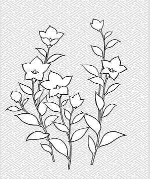 Vector line drawing of flowers-28(Campanulaceae)