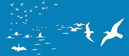 Birds vector material