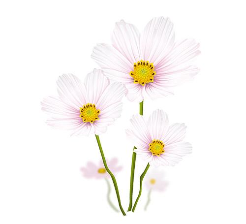 Elegant white flowers vector material