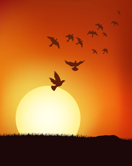 bird populations under the Sunset vector material