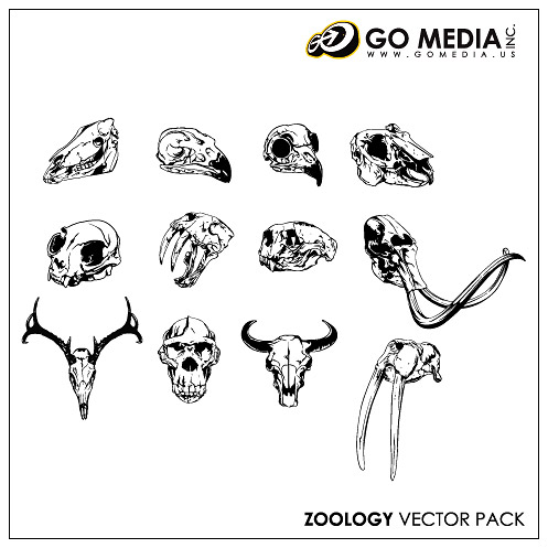 Go Media produced vector material - animal skull