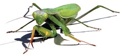 AI realistic rendering of vector material mantis