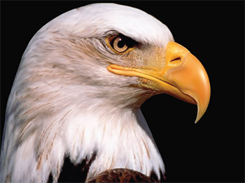 AI realistic rendering of the Eagle