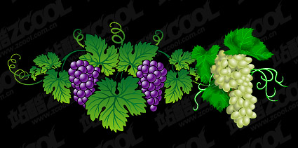 Vector exquisite grape material