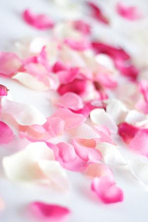 Rose petals picture