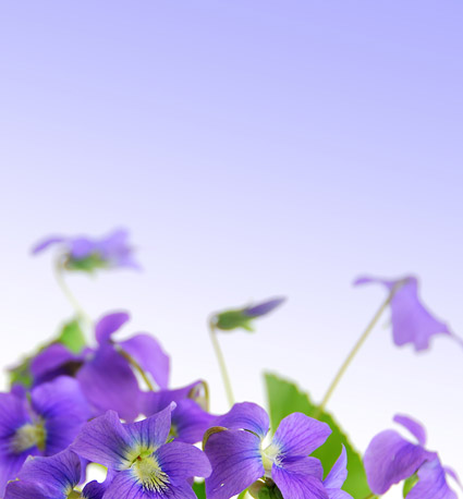 Elegant purple flowers picture material