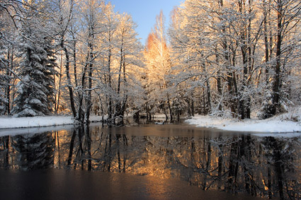 Snowmelt in the forest picture material