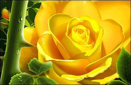 The yellow roses with water