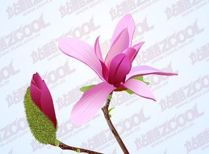 Pink Magnolia vector material