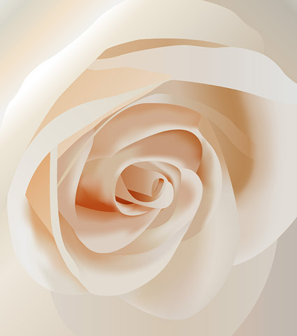 Vector white roses close-up material