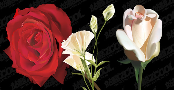 flowers realistic rendering of vector material