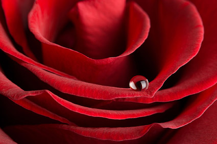 Big close-up picture of red roses material -4