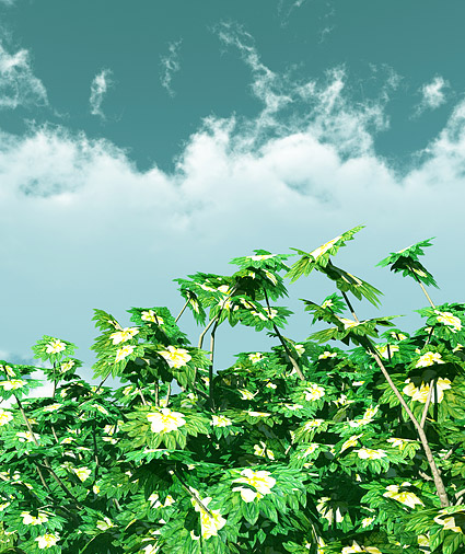 Blue sky and plant picture material