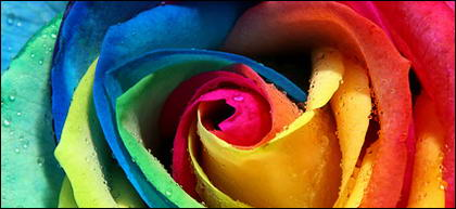 Rose color close-up picture material