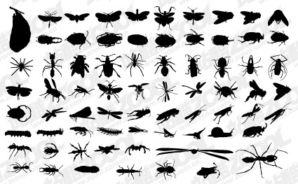 Vector silhouette of various insect material