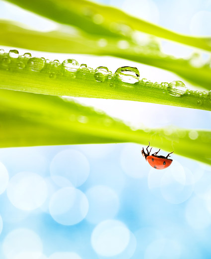 Floating plants and insects picture material-6