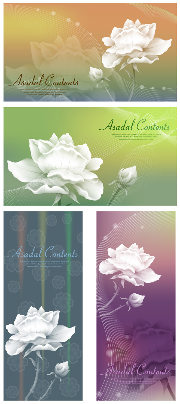 Background of white roses with dream material vector
