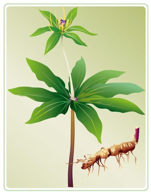 Vector Plant