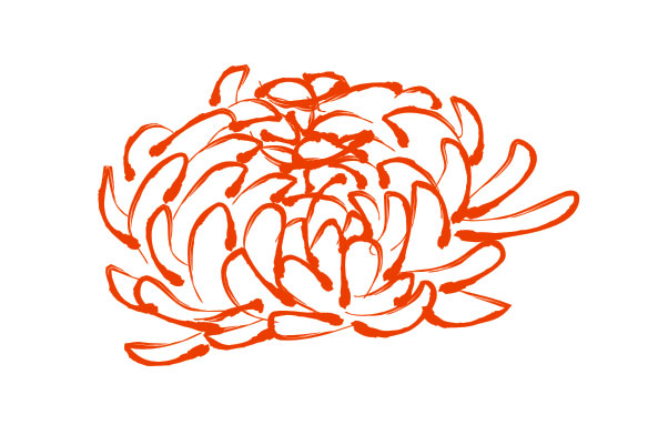 Chrysanthemum pattern vector
