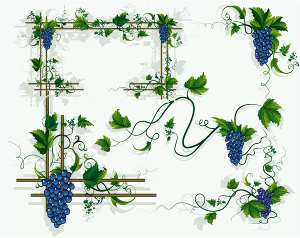Grapes, grape vines, grape leaf border vector material