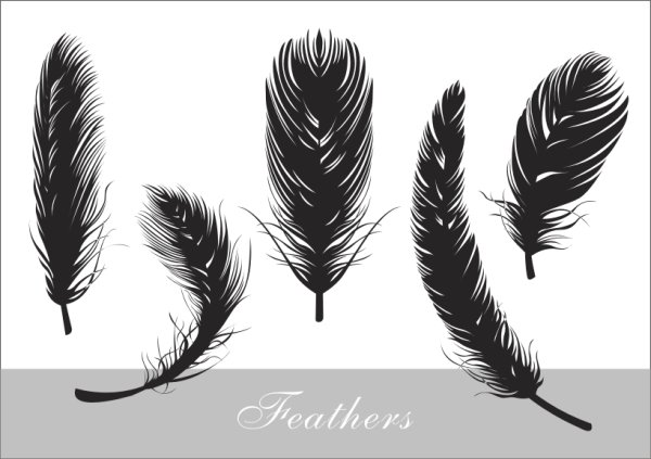 Realistic feather silhouette vector