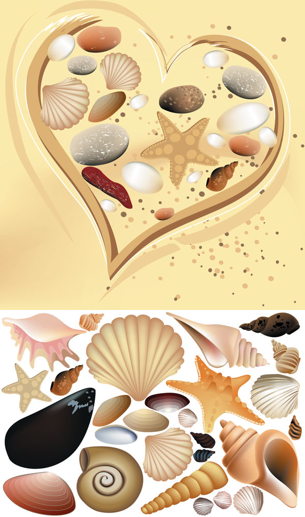 Vector Colorful Shell