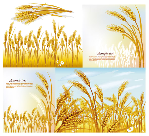 Wheat vector material