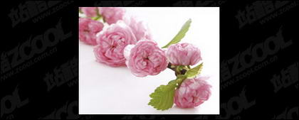 Pink flower picture quality material-2
