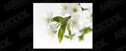 White flowers picture quality material