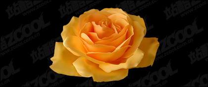 Realism yellow roses vector material