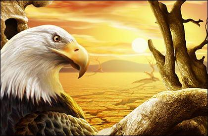the eagle under Sunset