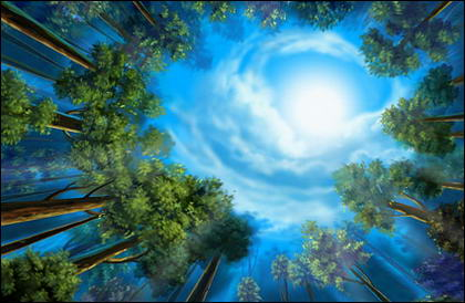 the woods landscape